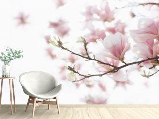 Beautiful flowering magnolia tree. Springtime outdoor scene