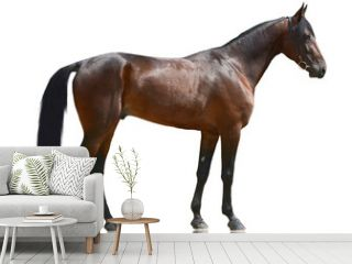 The brown powerful sport horse standing isolated on white background. side view