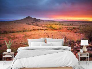Desert Glory