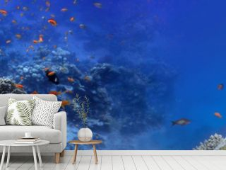 Underwater panorama and coral reef and fishes