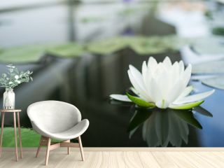 The beautiful white lotus flower or water lily reflection with water in the pond