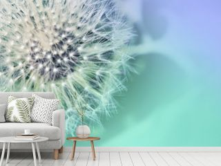 Dandelion. Dandelion close up on abstract blurred background