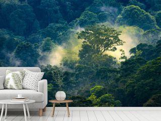 Magical sunrise in jungle