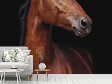 Portrait of Orlov trotter horse on a black background