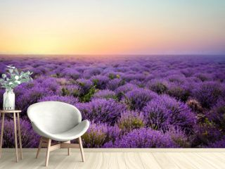 Lavender field at the sunset
