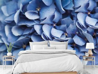 Blue hydrangea flora background closep top view