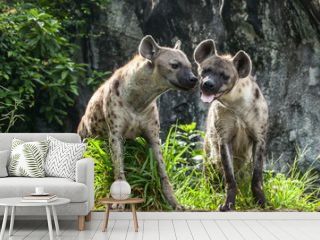 Hyena 2 stood  in the forest in love.