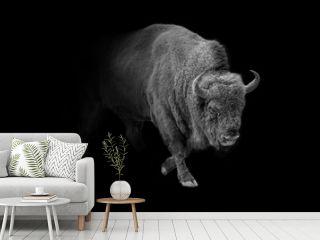 european bison animal wildlife wallpaper