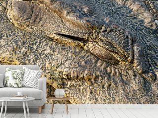 Close-up of a closed eye of a crocodile (Crocodylus niloticus), Botswana, Africa