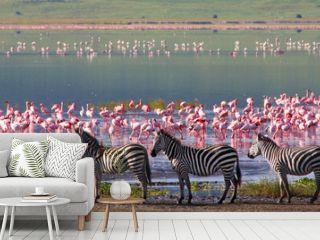 Zebras and wildebeests in the Ngorongoro Crater, Tanzania
