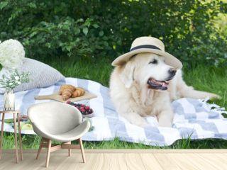 Picnic with Dog Golden Retriever Labrador Instagram Style Food Fruit Bakery Berries Green Grass Summer Time Rest Background Sunlight