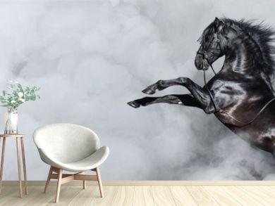Black Spanish horse rearing in smoke.