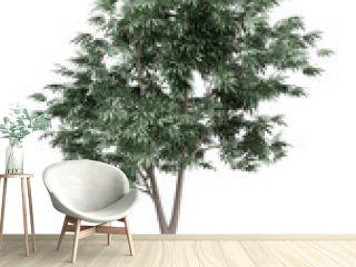 olive tree isolated on white background