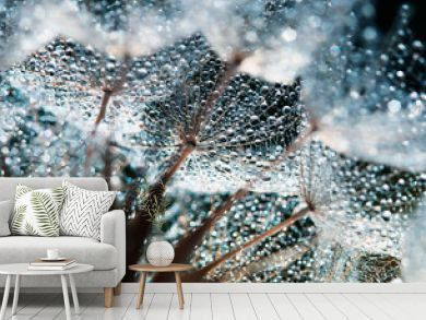 beautiful natural background with dandelion flower with fluffy light seeds in  drops