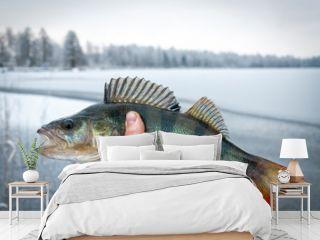 Ice fishing trophy - European perch
