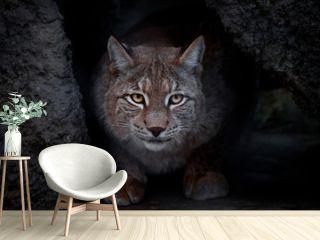 glance lynx.