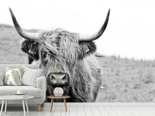 brown highland cow in black and white