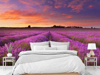 Lavender field at dawn