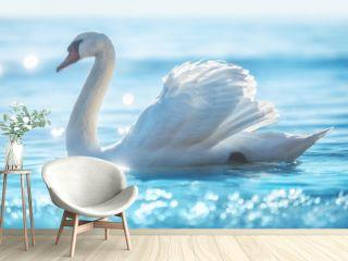 White swan in calm sea water, beautiful sunrise shot