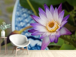 Purple and white water lily in flower pot