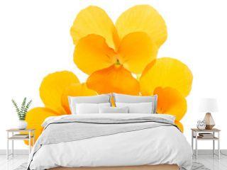 Orange Pansies