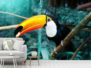 Toucan Toco sitting on a branch of the tree in the rainforest
