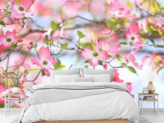 花水木 ピンクの花