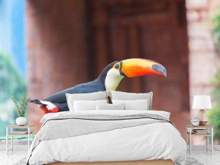 Bird Toucan (Ramphastos toco)