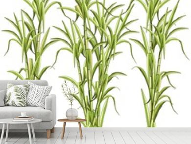 Sugar CaneSugar Cane Exotic Plant Vector Illustration isolated on White