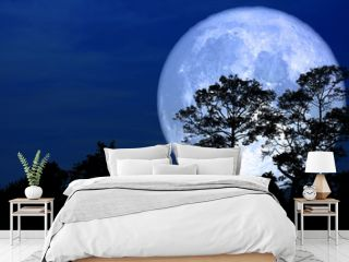 super snow moon back silhouette tree in field on night sky