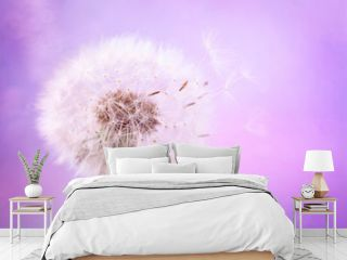 Beautiful dandelion flower with flying feathers on pink color background. Spring or summer nature scene.
