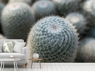 Macro photo of spiky cactus on natural blurred background