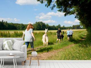 menschen die mit alpacas wandern