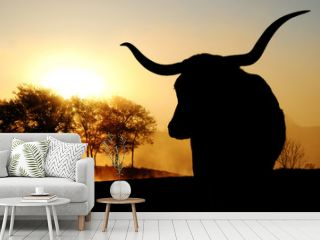 Texas Longhorn cow silhouette with scenic sunrise on landscape in background.