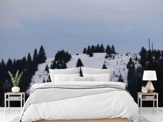 Mountain winter landscape of snowed forest