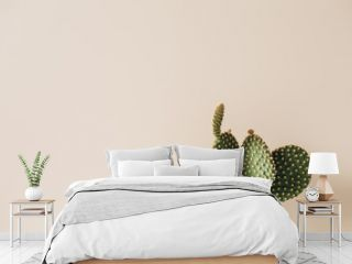 Closeup of cactus on beige background. Minimal neutral floral composition.