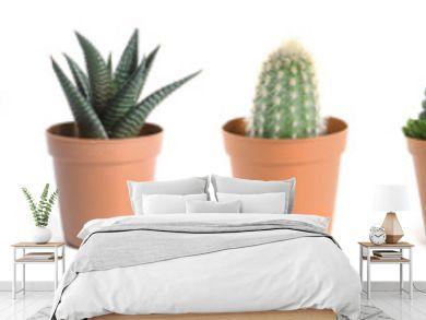 Beautiful cactus on white background