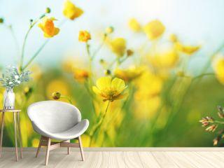 summer field of yellow wildflowers