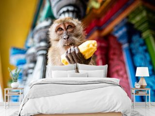Monkey with a banana at the Batu Caves, Kuala Lumpur, Malaysia