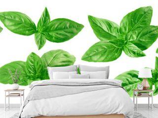 Fresh green basil set isolated on white background
