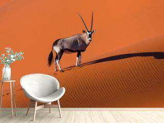 Gemsbok or gemsbuck (Oryx gazella), Namib Desert, Namibia, Africa