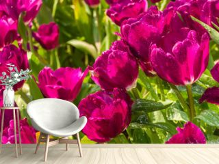Closeup pink tulips flower background. Beautiful view of tulips in fog landscape at the middle of spring or summer.