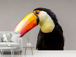 close-up portrait of a toucan bird with a nuetral background