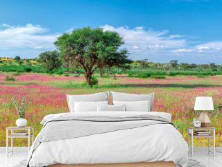 Violet flowering Kalahari desert after rain season, South Africa wilderness