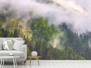 Pine trees forest silhouette with low fog clouds, panoramic banner background