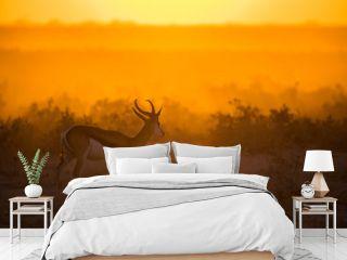 Springbok at Sunset
