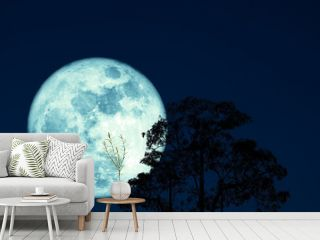 super full harvest moon on night sky back silhouette tree and cloud