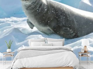 Seal On Ice By Sea