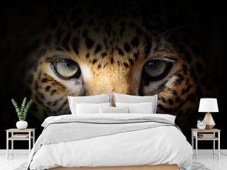 Leopard portrait on a black background