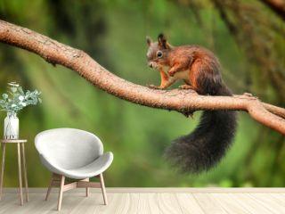 Cute red squirrel in autumn park on stump.